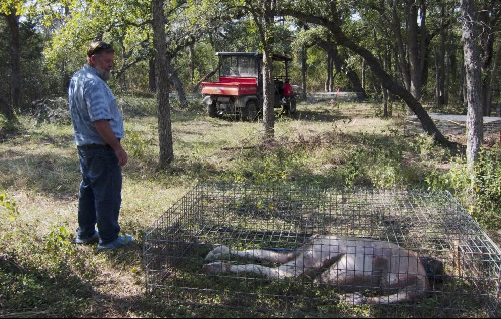Onderzoeker Daniel Wescott bij de recentste 'donatie' voor zijn lijkentuin. Foto: Bas den Hond